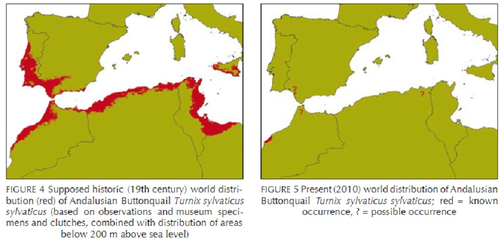 Historic and current distribution range of the Andalusian Buttonquail (Turnix sylvaticus sylvaticus).