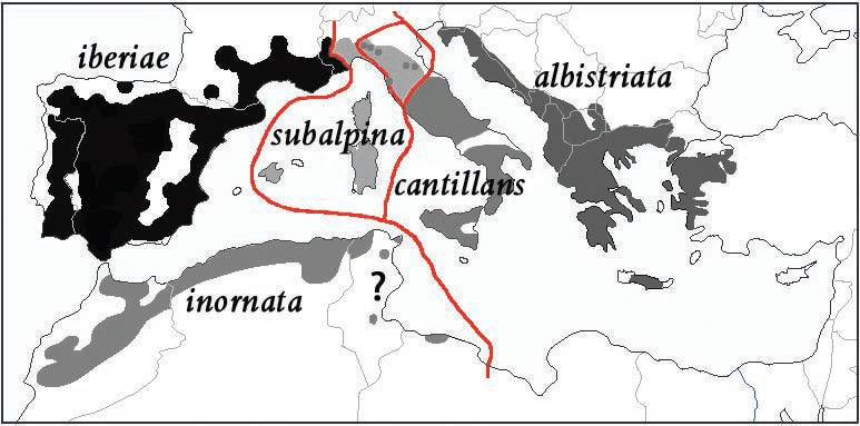 Map of the breeding ranges of all five taxa of the Subalpine Warbler complex. The grey zone in the north of Italy is of the intergradation between subalpina and cantillans; and the points are locations with proven cases of sympatry. The map constructed by Lars Svensson from Shirihai et al (2001), Brambilla et al (2006), and comments from M. Ullman (© Lars Svensson).