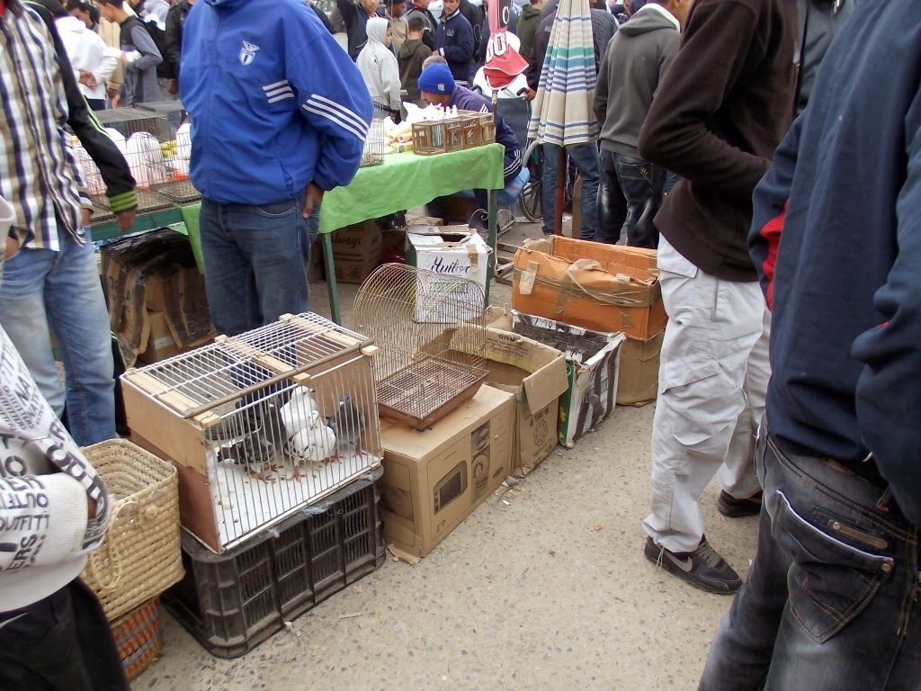 General view of bird market at Bab Guissa, Fes