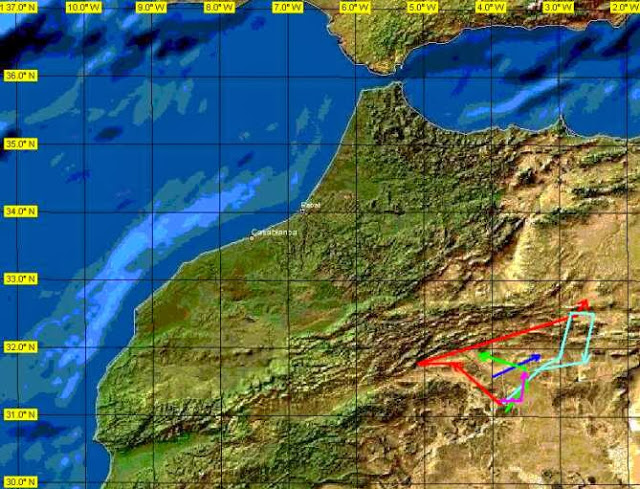 Movement of 5 females Houbara Bustard (Chlamydotis undulata) in eastern Morocco recorded by satellites in 1999 (map by L. Peske)
