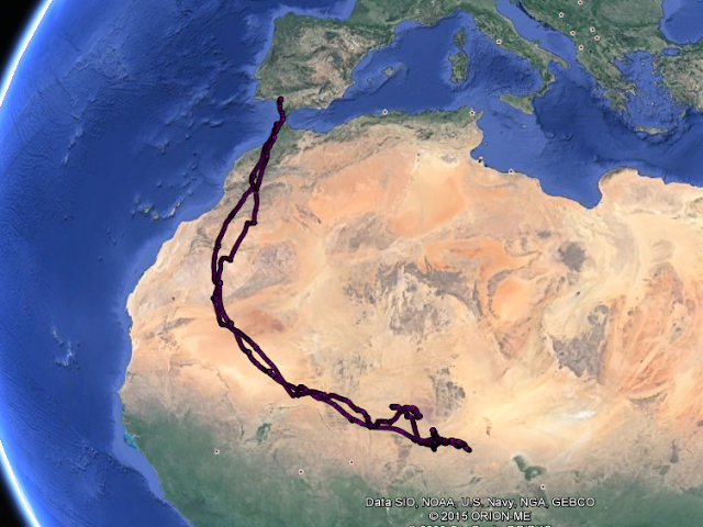 White Stork 'C666' crossed 6 countries during its short lifetime between June and early November 2013 (Map of the Max Planck Institute for Ornithology).