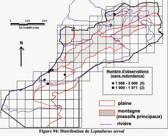 Serval observations in Central Morocco up to the end of the 20th century (Fabrice Cuzin 2003)