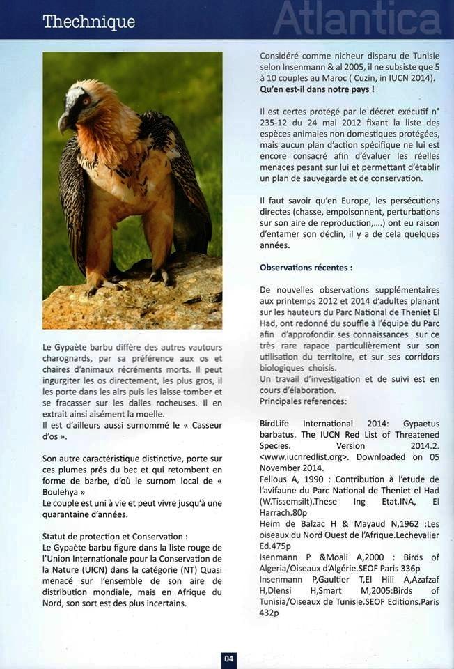 Le Gypaète barbu dans le ciel du Parc National de Theniet El Had, Algérie (page 2)