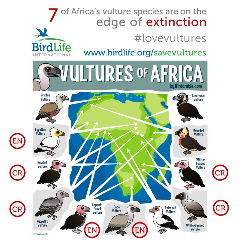 African vultures and their conservation status / النسور الأفريقية وحالة حفظها