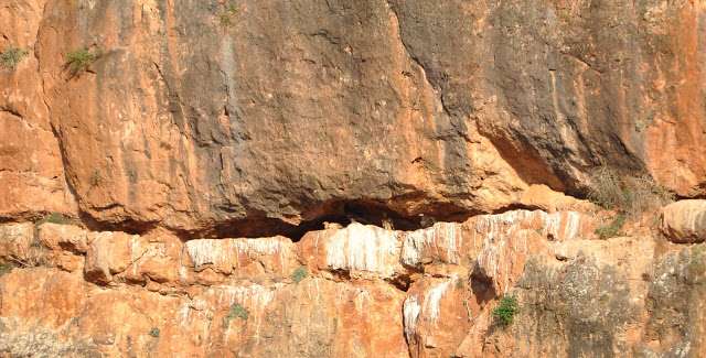Communal roosting site of the Egyptian Vulture, Middle Atlas, Morocco (partial view)