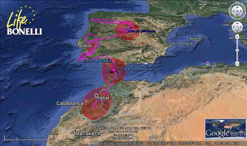 Movement of the Bonelli's Eagle 'Turón' (LIFE Bonelli project)