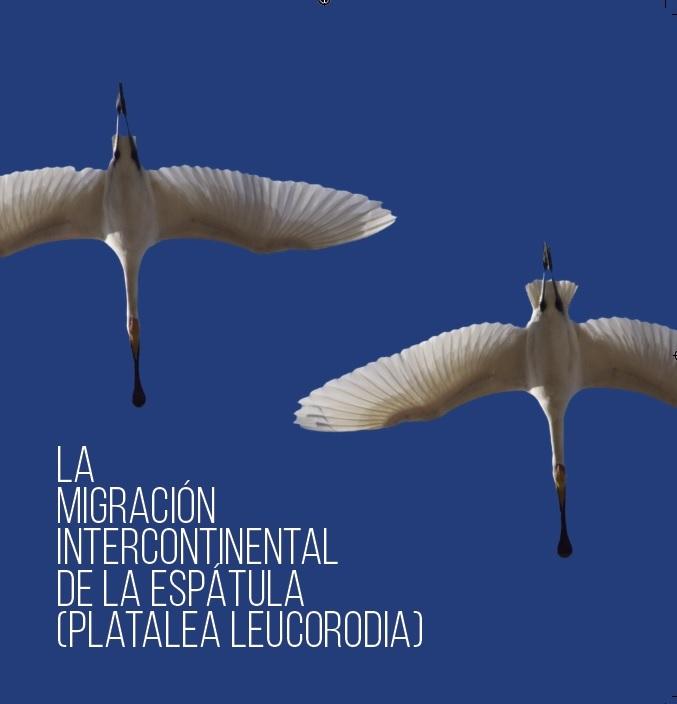 "Front cover of the book ""La migración intercontinental de la espátula (Platalea leucorodia)"""