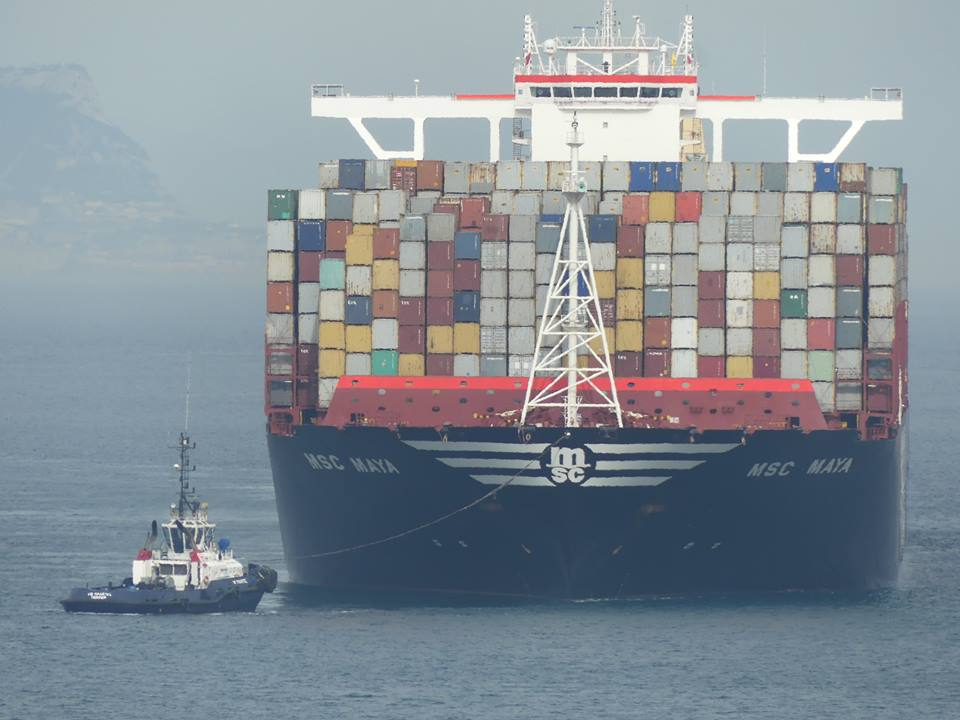 Scopoli's Shearwaters - Pardelas cenicientas (Calonectris diomedea) migrating between container ships, Strait of Gibraltar, 2 Nov 2016 (Juan Ramírez Román)