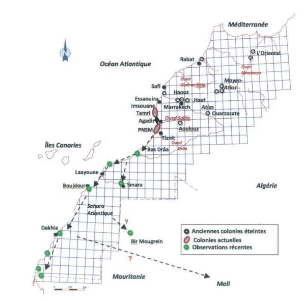 Distribution des anciennes colonies et observations récentes de l'Ibis chauve au Sahara occidental, sud du Maroc. Les flèches en pointillés indiquent les mouvements de dispersion (Mohamed Aourir).