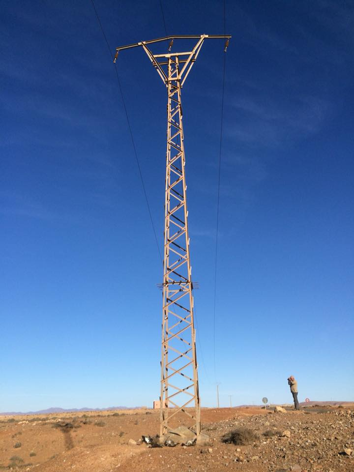Atlas Long-legged Buzzards at the bottom of an electricity pylon, Guelmim region, 23 November 2017 (Karim Laïdi)