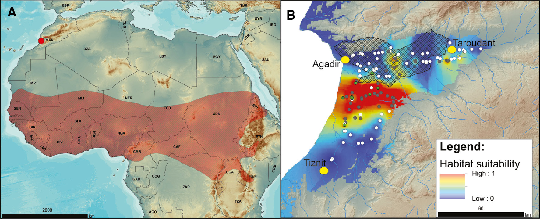 Global range map of the striped ground squirrel (Euxerus erythropus), and habitat suitability map in Morocco