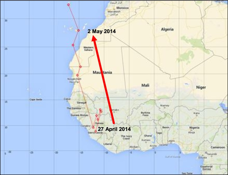Plain Swift's spring migration: Position of H001 between 27 April and 2 May 2014.
