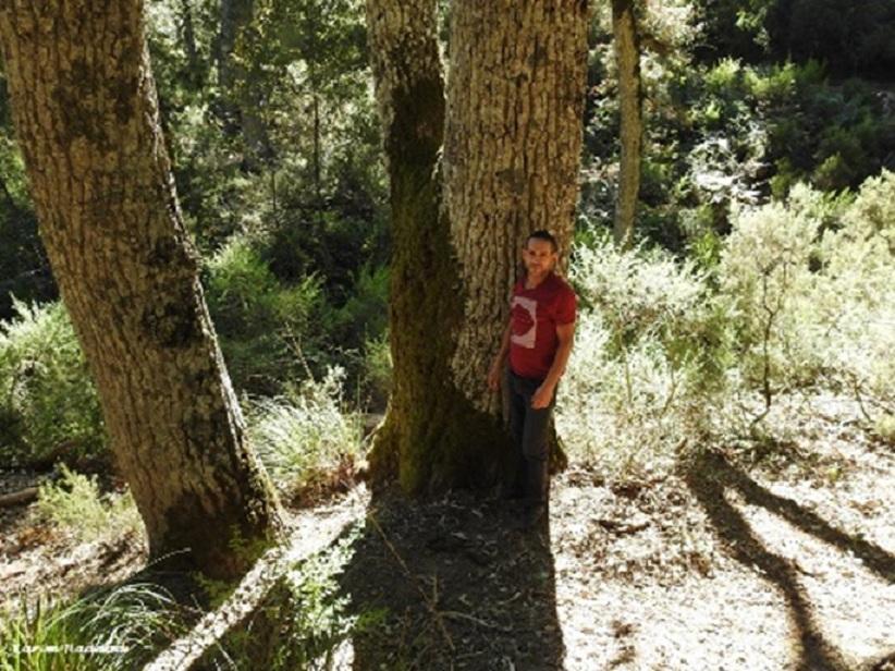 Algerian oak (Quercus canariensis), Larbaâ Forest, Oudjana, Algeria, 24 Sep. 2018 (Karim Haddad).