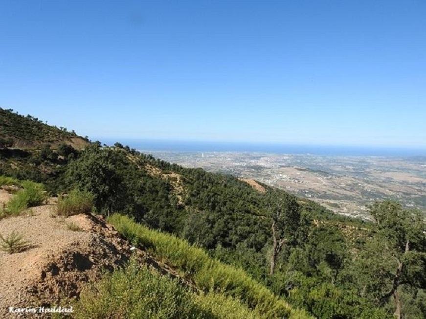 Larbaâ Forest or Ghabet Ezzen, Oudjana, Algeria, 24 Sep. 2018 (Karim Haddad).