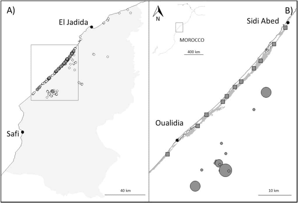 Study area of the Andalusian Buttonquail in Morocco. A) Non-systematic surveys in the region of Doukkala-Abda (light grey shaded area) between 2002 and 2010. Grey dots are positive results and black dots are negative. B) Systematic surveys sampling sites (grey squares) in the cultivated strip (dark grey shaded area) and in the natural habitat (grey circles proportional to the surface of the surveyed site).