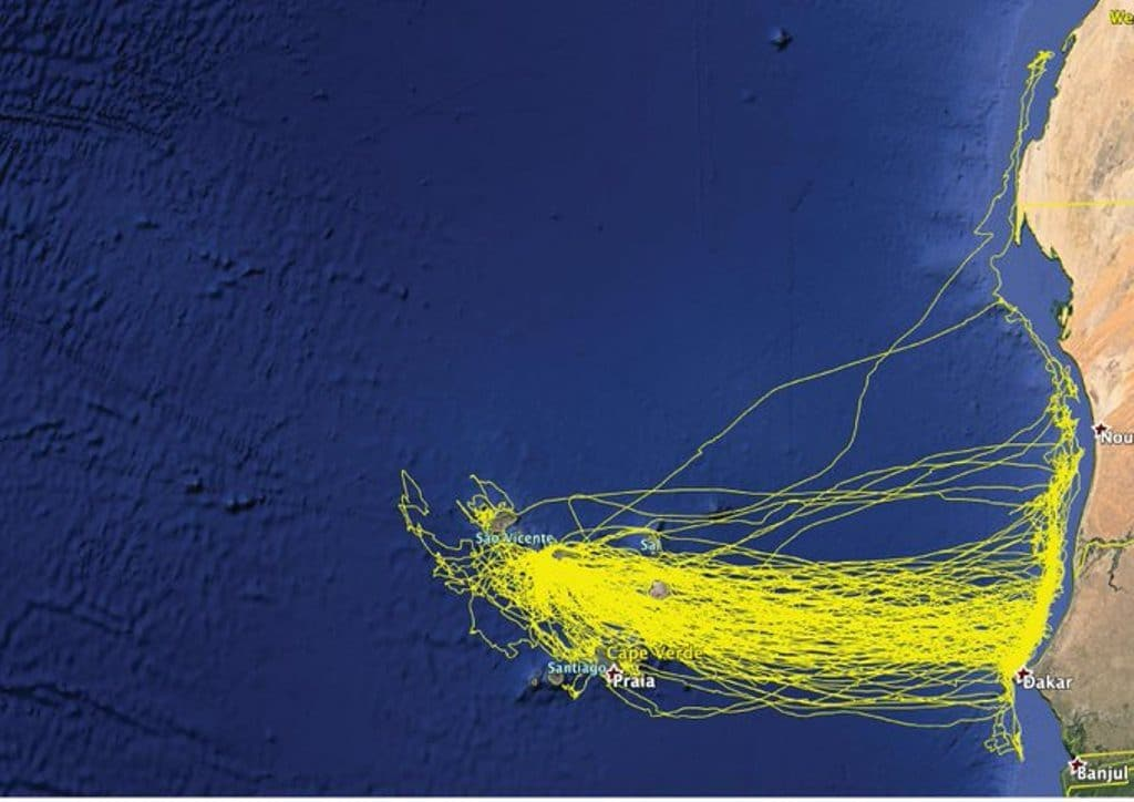 Foraging patterns of Cape Verde Shearwaters from Raso islet since 2013. Note that one bird went as far north as Dakhla during a feeding trip (Map shared by Vitor Paiva).