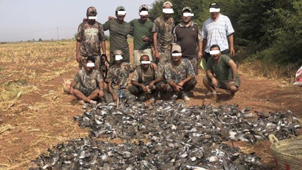 Turtle Dove slaughter in Marrakech region by foreign hunters. Those same hunters appeared in the video and other photos not shown here.