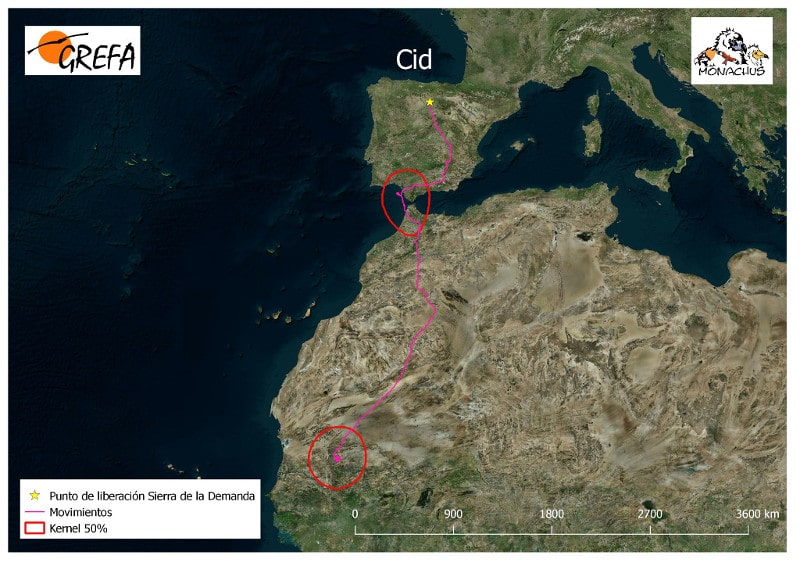 The southward migration of 'Cid' from northern Spain to Mauritania.